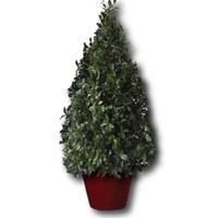 boxwood-topiary