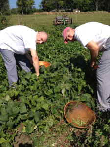 Chef Laurent & Chef Charles out in our garden picking fresh veggies for the evening's meal!